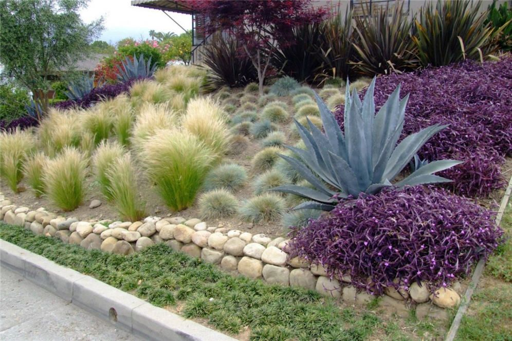 Blue fescue agave americana century plant mondo grass for Grass bushes landscaping