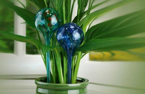 Desde ahora podrás ausentarte de casa sin necesidad de preocuparte por el cuidado de las plantas gracias a Aqua Loon. Artículo fácil de usar que incluye 2 globos de riego con una autonomía aproximada de 10 días. #plantas #hogar