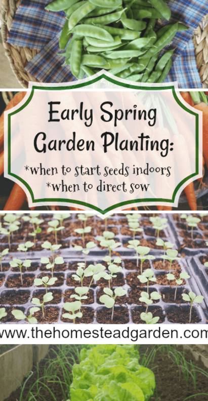 Early Spring Garden Planning: this information includes details on what seeds to start indoors and what to direct sow outdoors. This list includes both vegetables and fruits. #earlyspringgardening #gardenplanning #gardenplanting