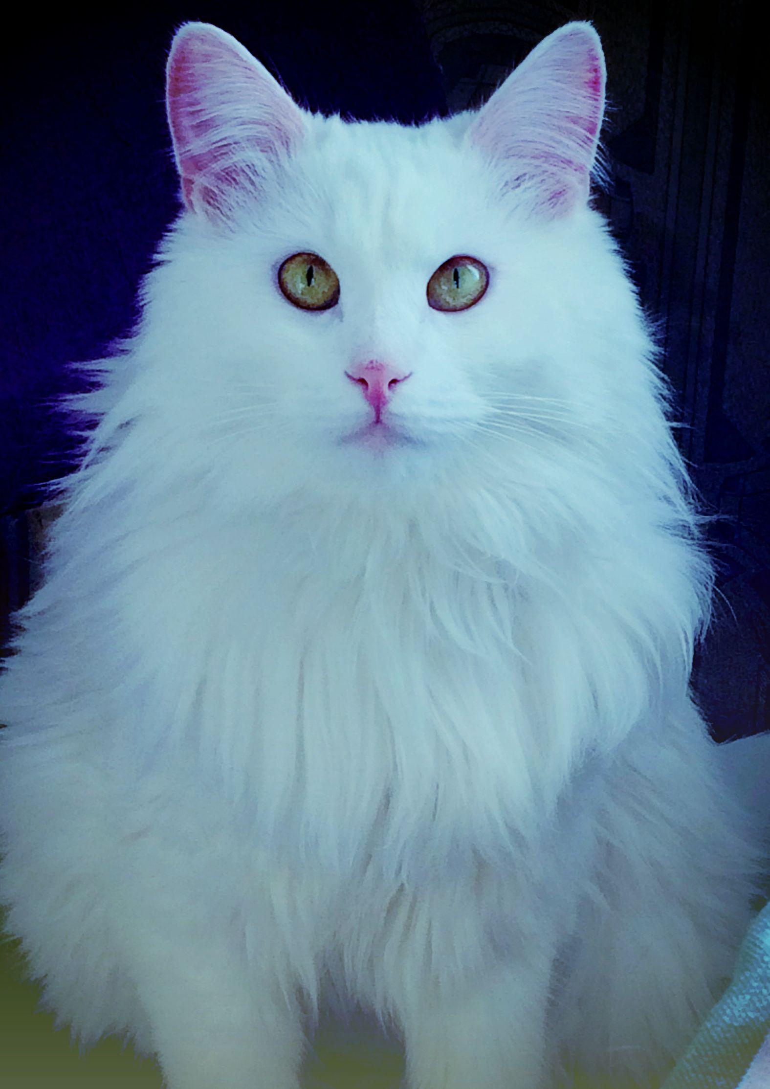 My Favorite Cat Arthur Edward Waite