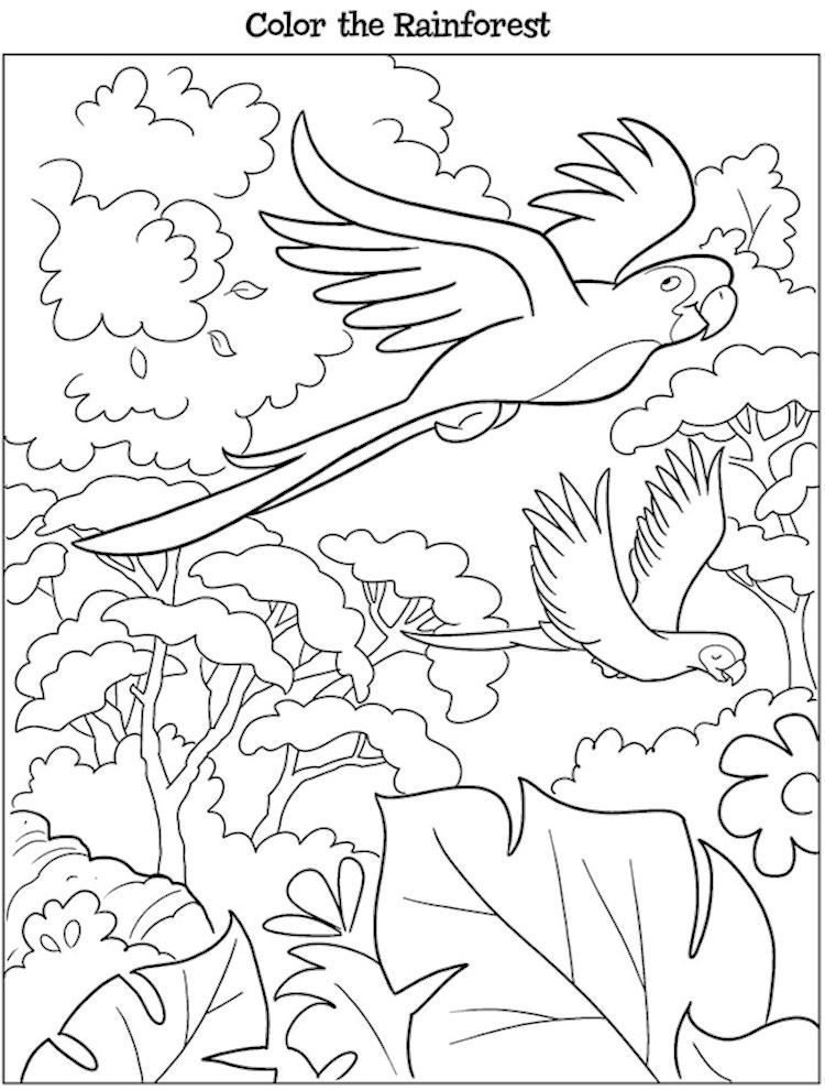 Dover Kooky Birds Coloring Page Rainforest