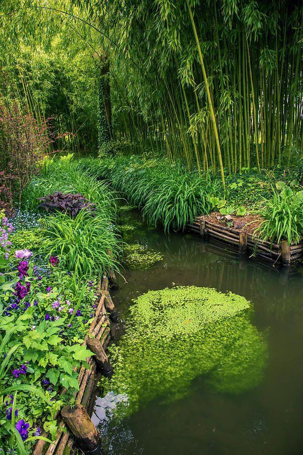 Alone Photograph Beautiful Water Path Along Bamboo Forest By Zina Zinchik In 2020 Backyard Water Feature Ponds Backyard Landscape