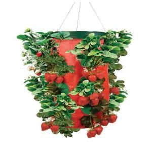 10 In Plastic Strawberry Planter Tt091440 At The Home Depot Strawberry Plants Strawberry Planters Strawberry Hanging Basket