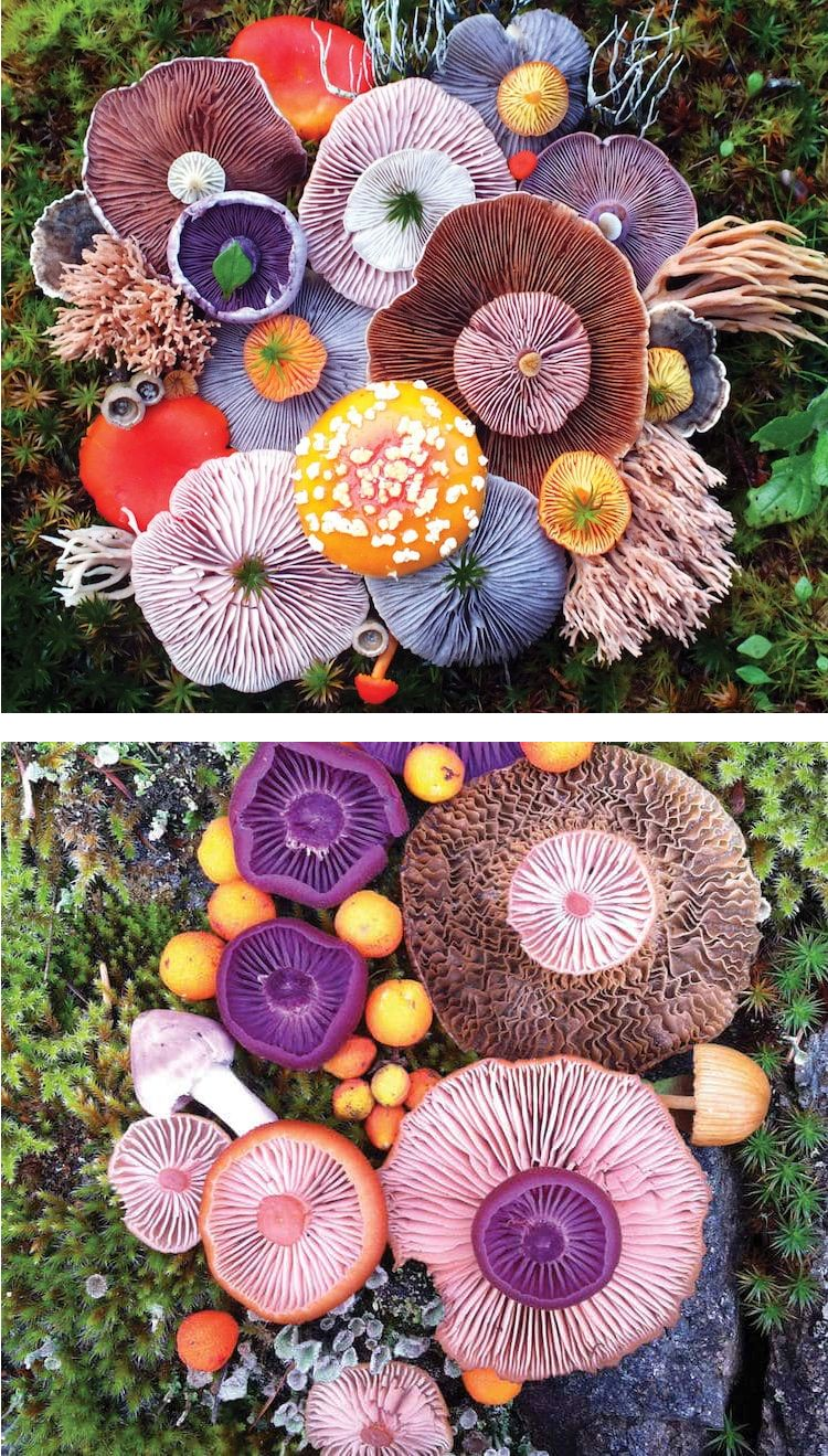 In her Nature Medleys series, artist and and nature photography expert Jill Bliss arranges and photographs colorful clusters of mushrooms.
