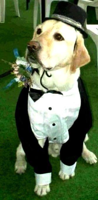weddingdog yellow labrador in tuxedo tonik flowers in their coats dog weddin stuff. Black Bedroom Furniture Sets. Home Design Ideas