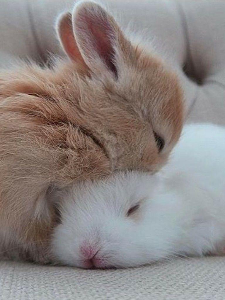 приветливо красивое фото спящей зайки список