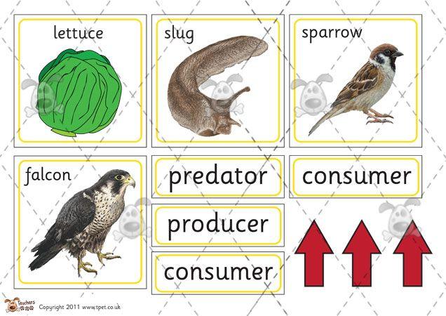 Teachers Pet - Food Chain Sorting Cards - Premium ...