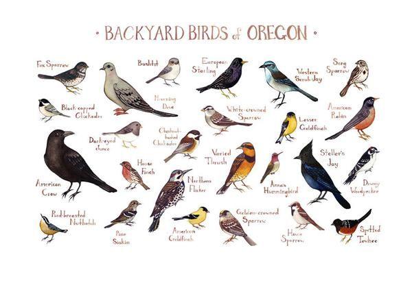 Oregon Backyard Birds Field Guide Art Print   Backyard ...