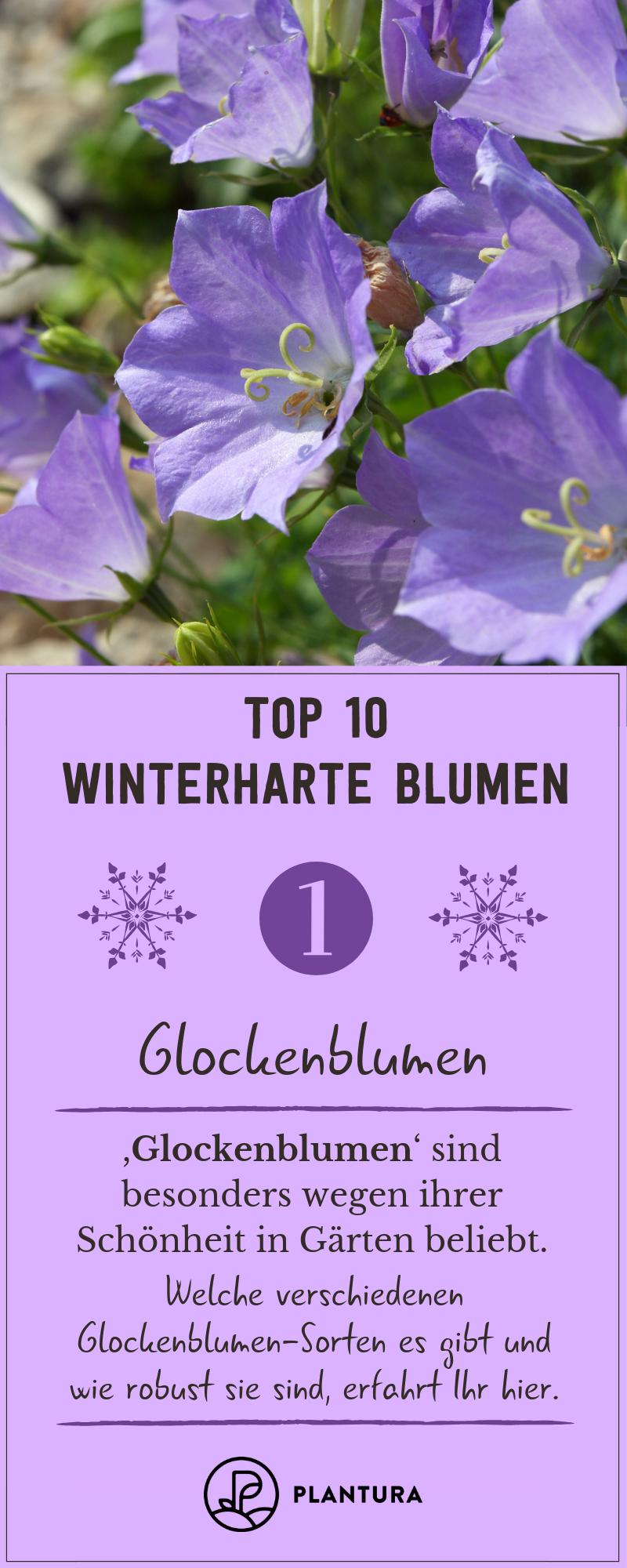 Top 10 Winterharte Blumen Glockenblumen Die Glockenblume Sorgt Als Winterharte Pflanze Auch Im Wint Winterharte Blumen Winterharte Pflanzen Blumen Fur Garten