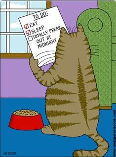 Image result for checklist cartoon cat