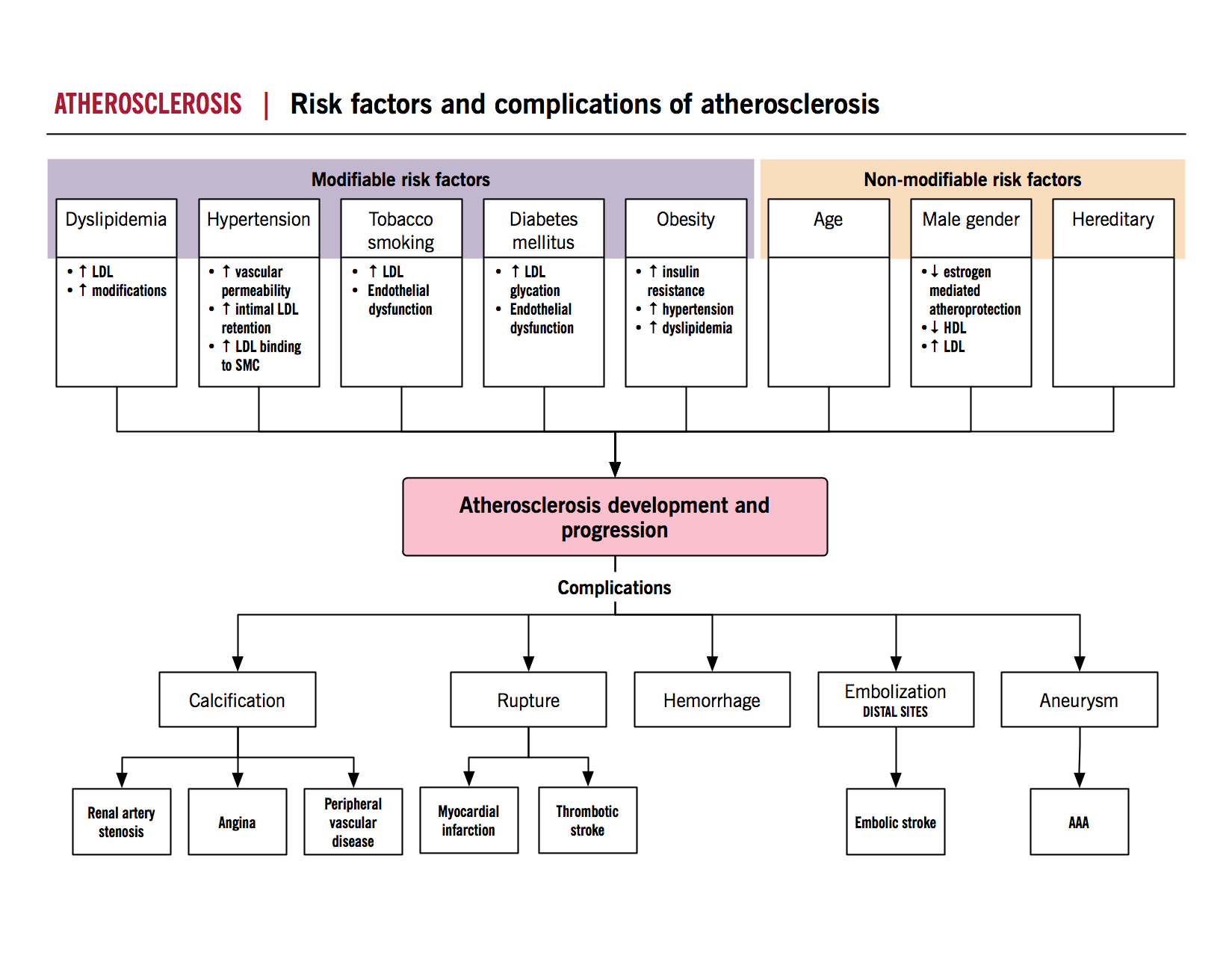 Atherosclerosis risk factors and complications mcmaster atherosclerosis risk factors and complications mcmaster pathophysiology review nvjuhfo Gallery