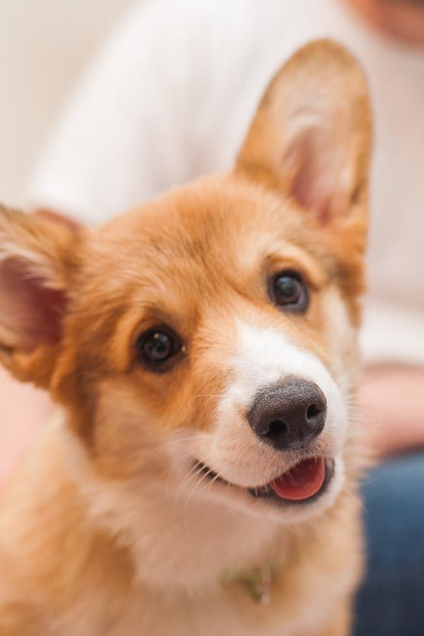 The Best Dog Breeds for StressedOut Humans Best dogs