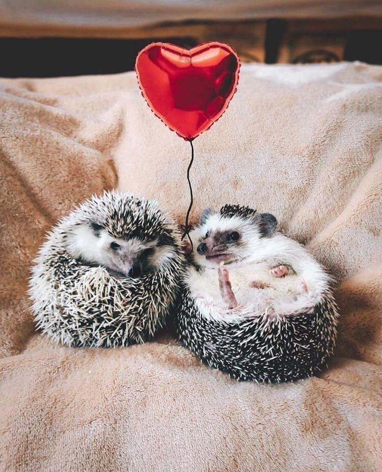 Картинки милая любовь