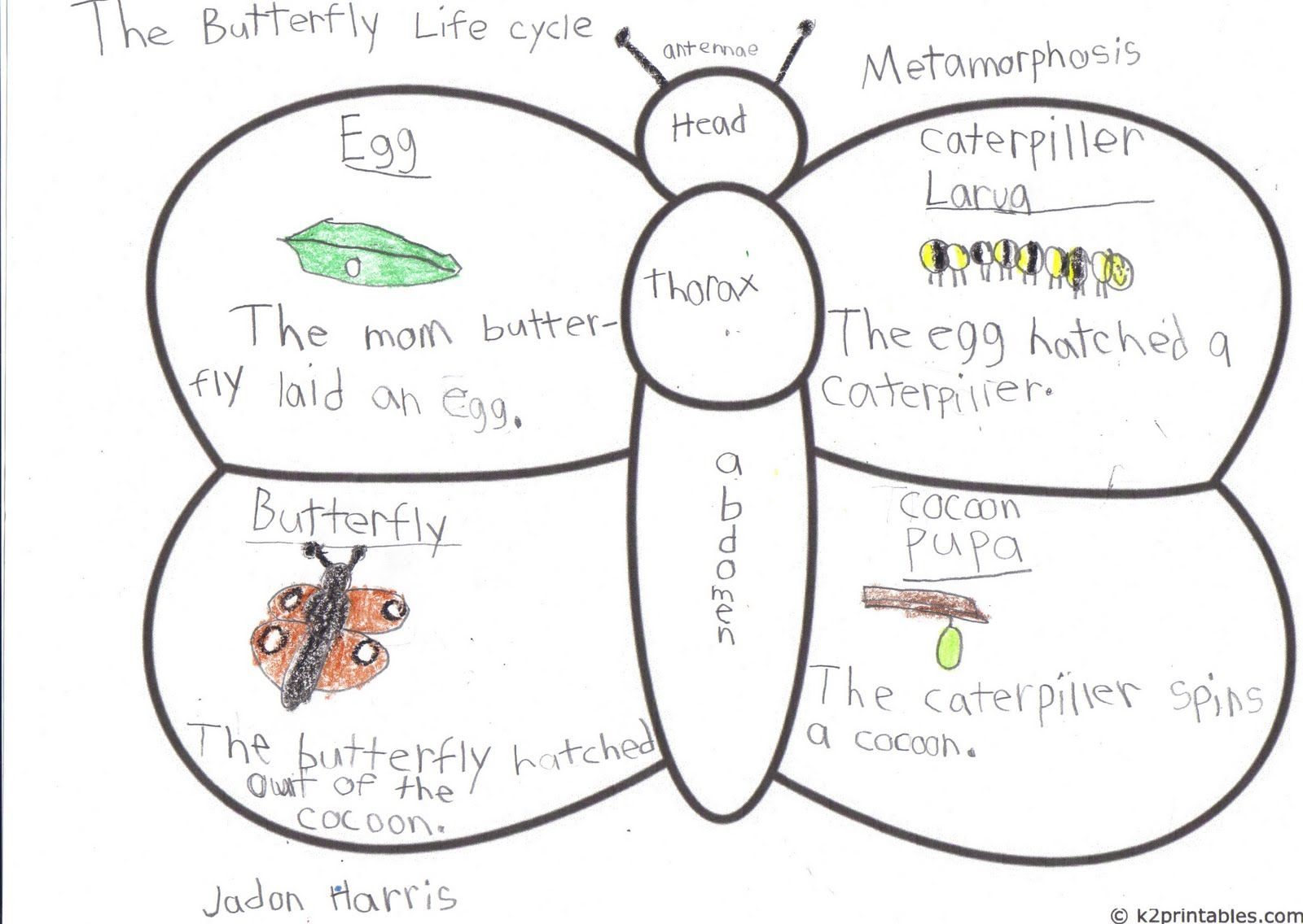 Butterfly Anatomy And Life Cycle In One Might Just Have To Give This One A Try