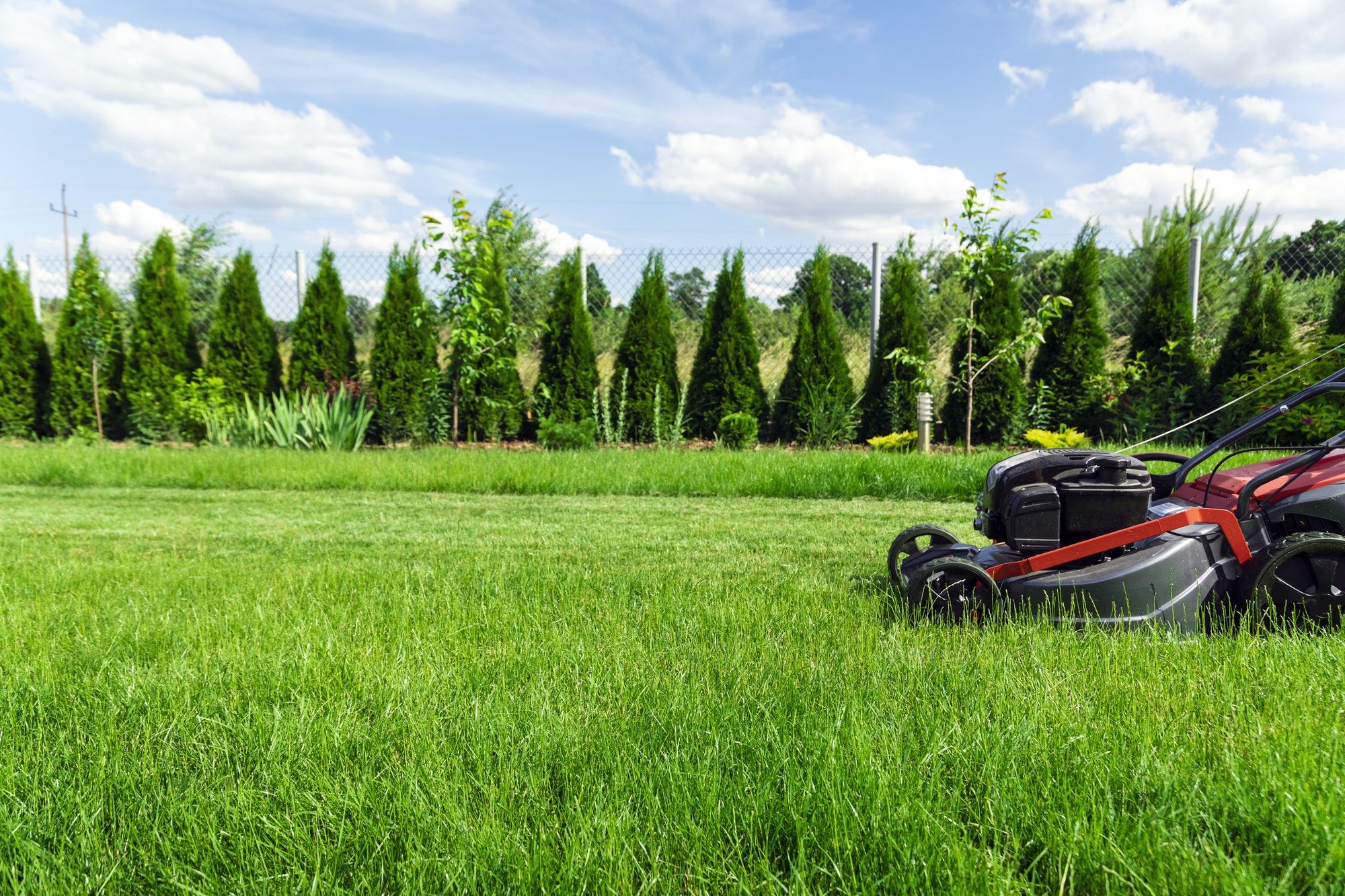 Best grass seed for clay soil in 2020 best grass seed