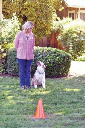 Train Your Dog Using Imitation Training Your Dog Your Dog Crazy Dog Lady