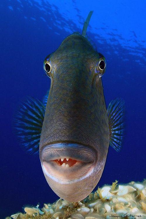 Картинки рыб приколы