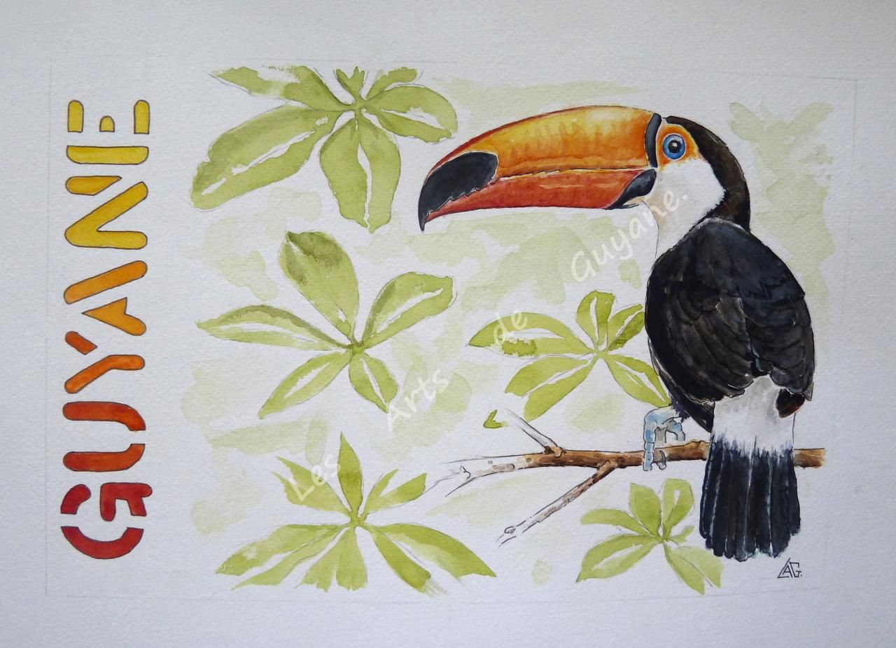 Toucan Toco Aquarelle Animaux D Aquarelle Animaux