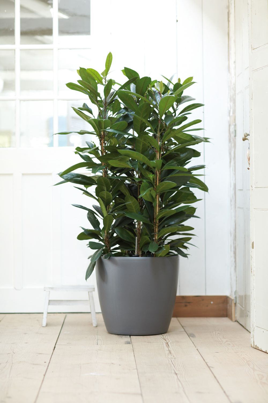 Bringing bigger plants indoor elho brussels round - Macetas interior ...