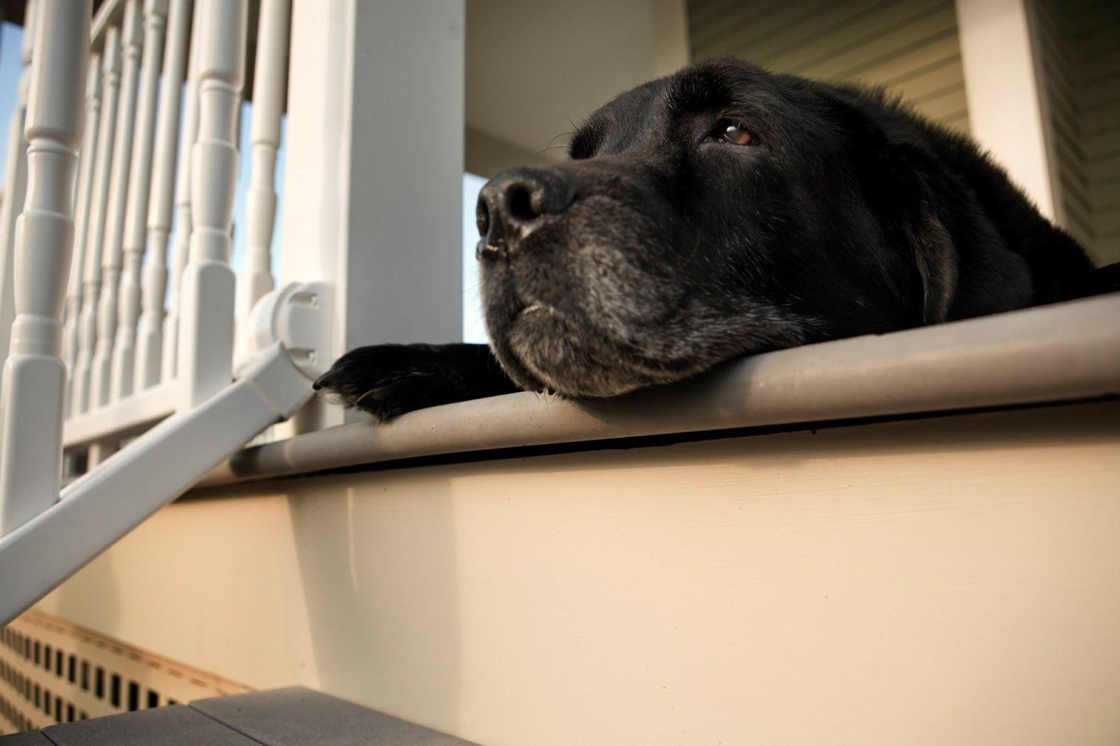 OLDER PET…SHE'S EVERYTHING! COGNITIVE