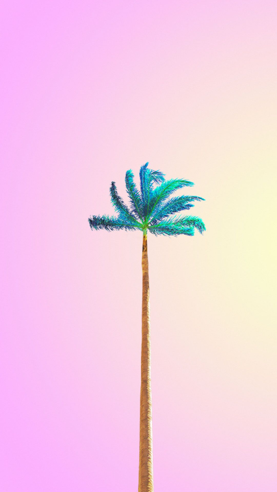 Mint Palm At Sunset Minimalist Wallpaper Best Iphone Wallpapers Android Wallpaper