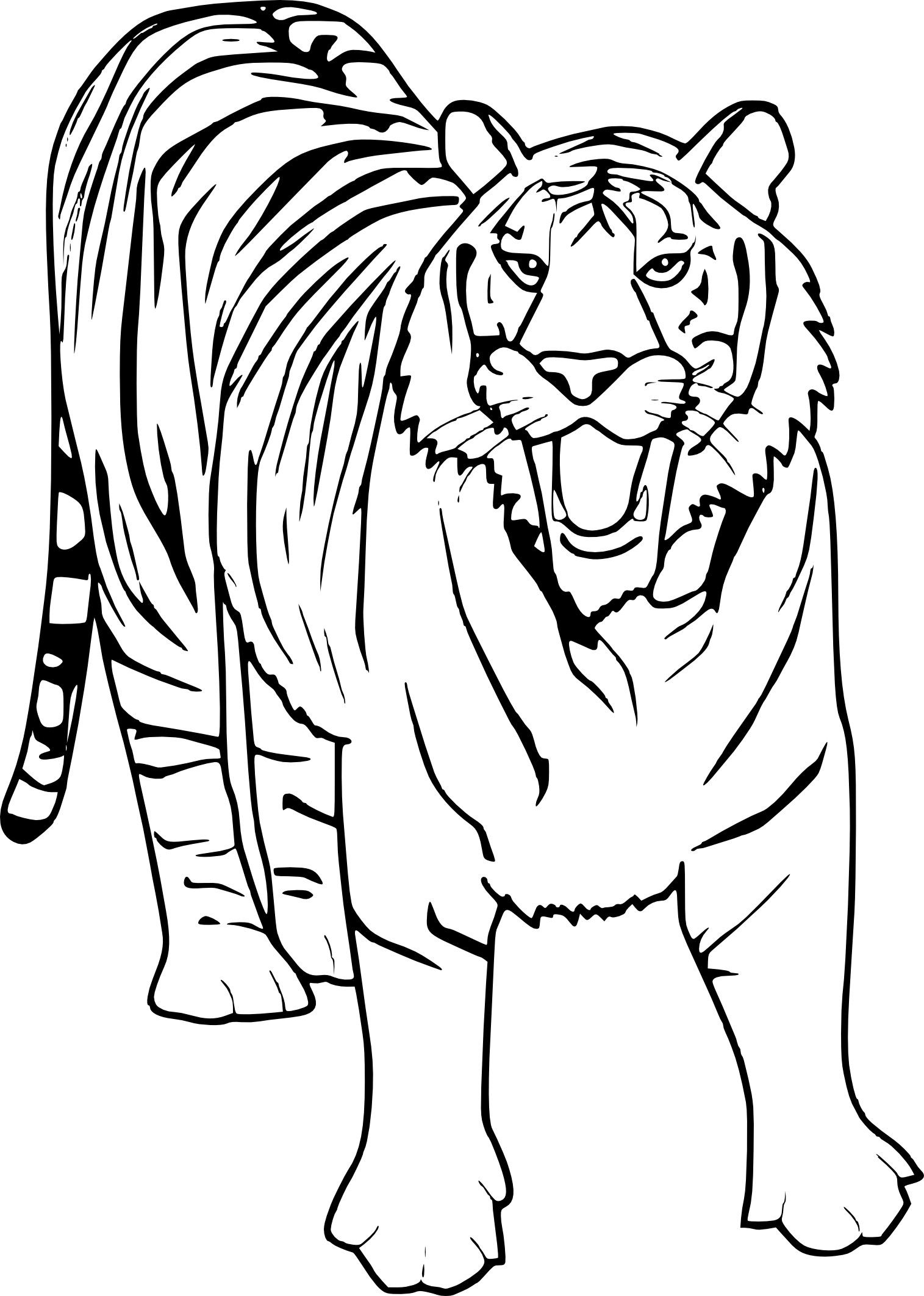 Tiger Coloring And Drawing Print Zoo Animal Coloring Pages Tiger Drawing For Kids Animal Coloring Pages