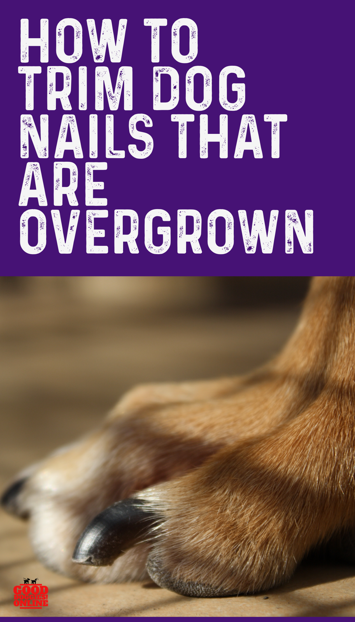 How To Trim Dog Nails That Are Overgrown Complete Guide Good Doggies Online Dog Nails Trimming Dog Nails Good Doggies Online