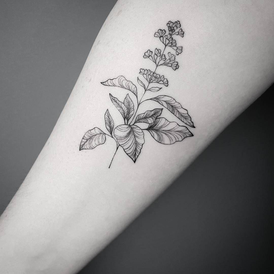 """Gefällt 1,498 Mal, 4 Kommentare - Frauke Katze (@fraukekatze) auf Instagram: """"Peppermint for Anne. ♢book open: 13-16 February♢  #flowertattoo #botanicaltattoo #fraukekatze…"""""""