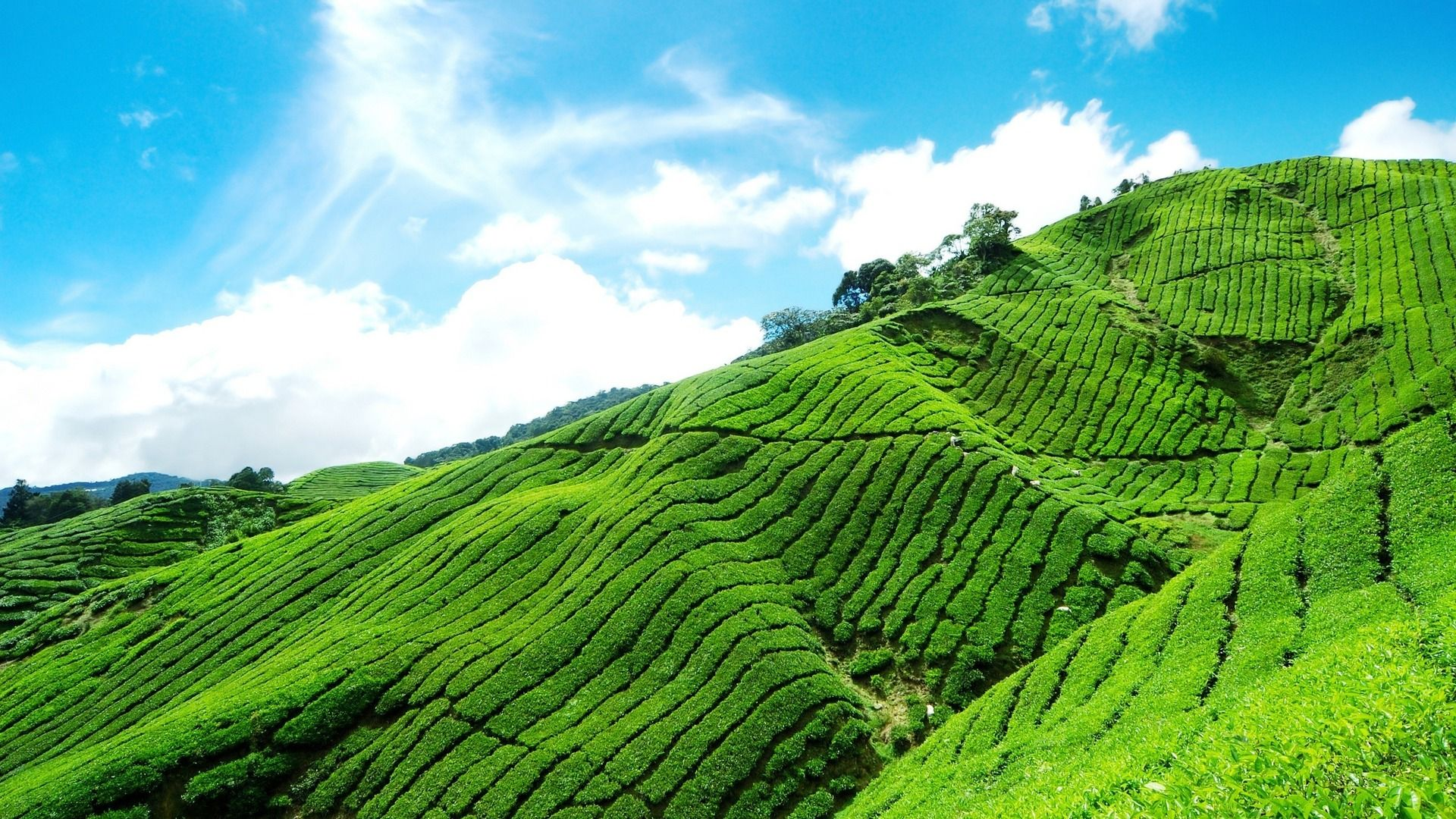 Munnar is an attractive destination with the world's best