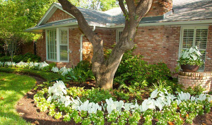 Select the right plants for a shady area to add a colorful display to your garden