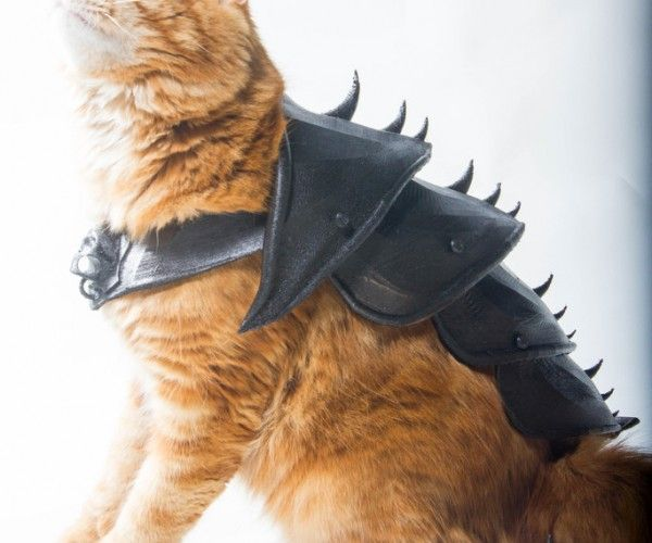 Coyote Armored Vest Protects Small Dogs from Attacks | Cat ...