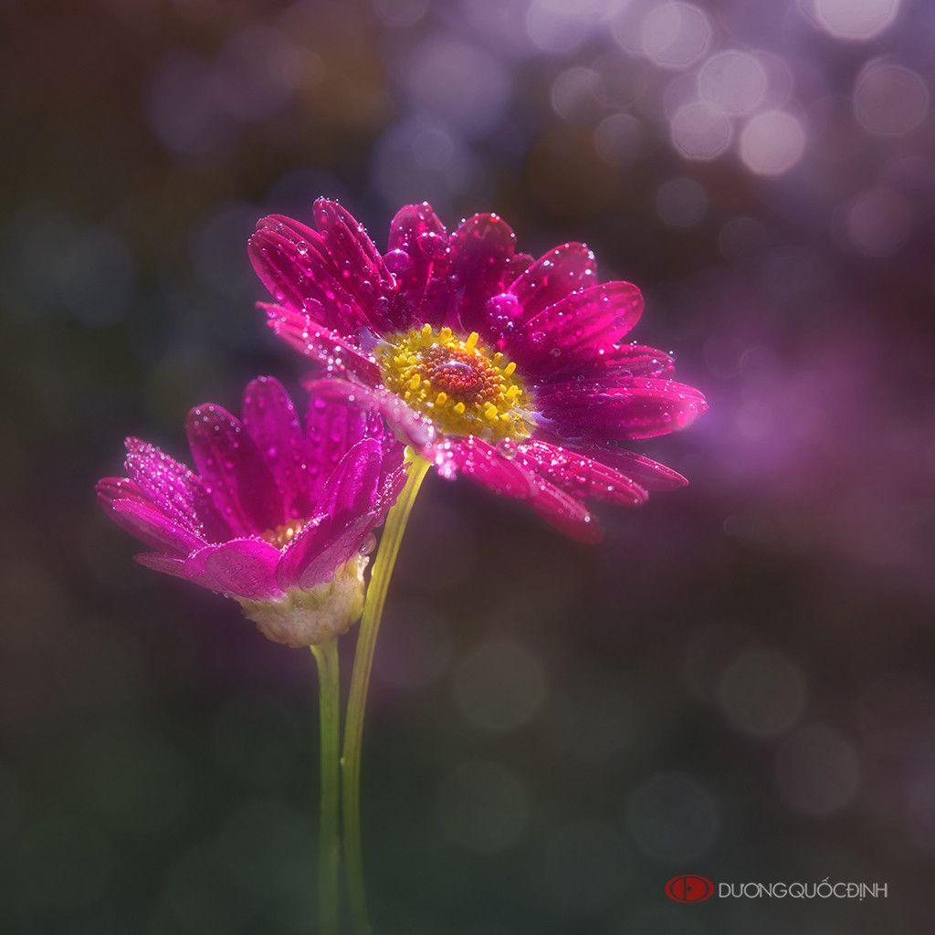Fotografia HL de Duong Quoc Dinh na 500px | Still life art