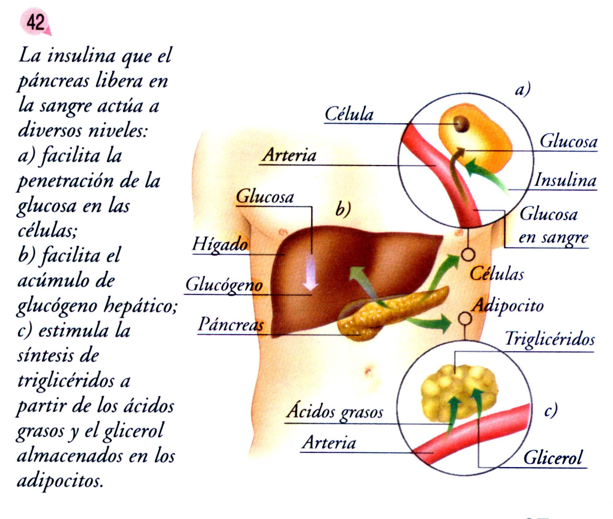 hipoglicemia en embarazo pdf