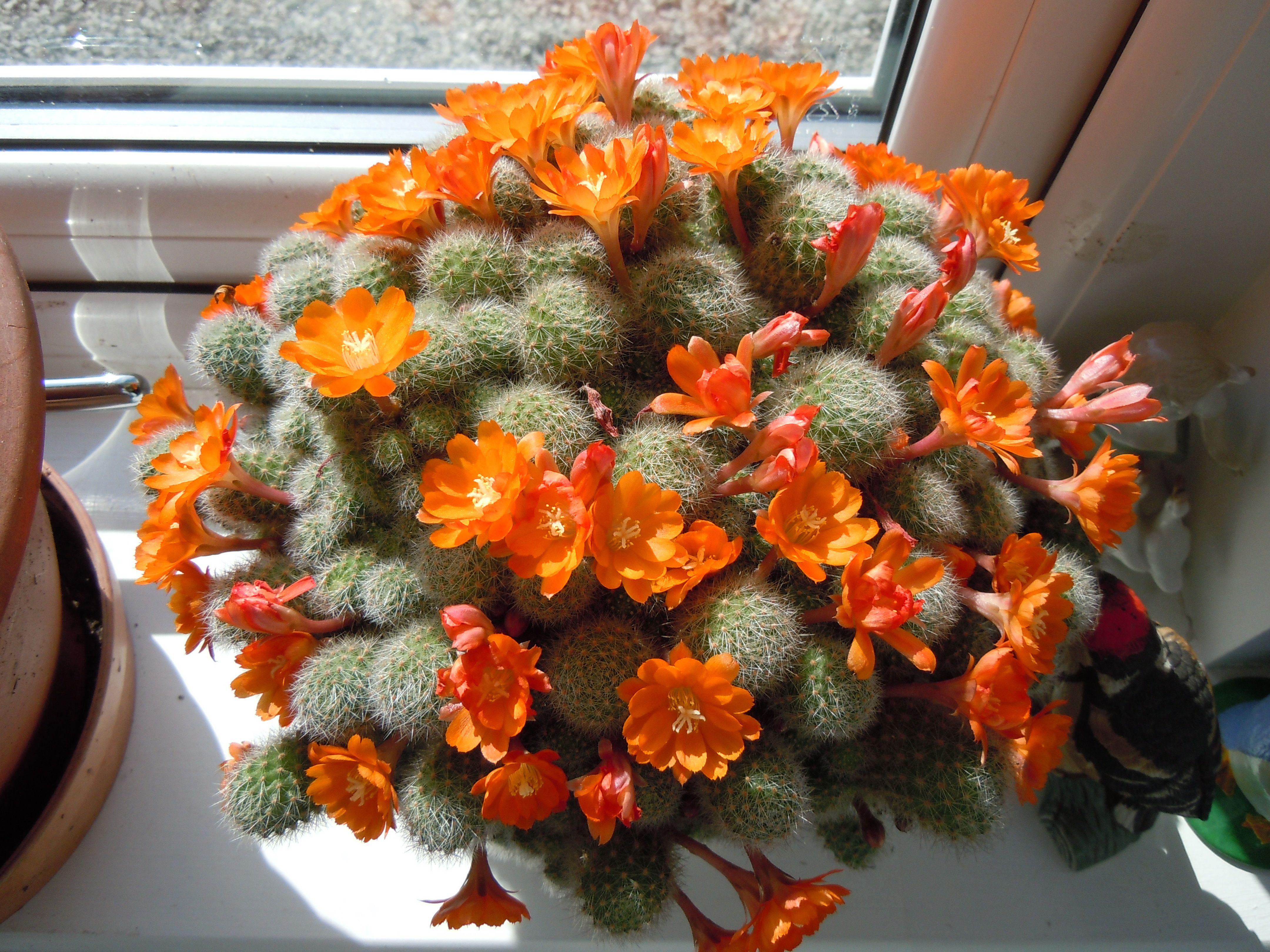 Cactus.  H.