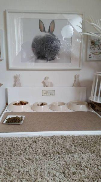 Freie Wohnungshaltung Ein Beispiel Haltung Kaninchen