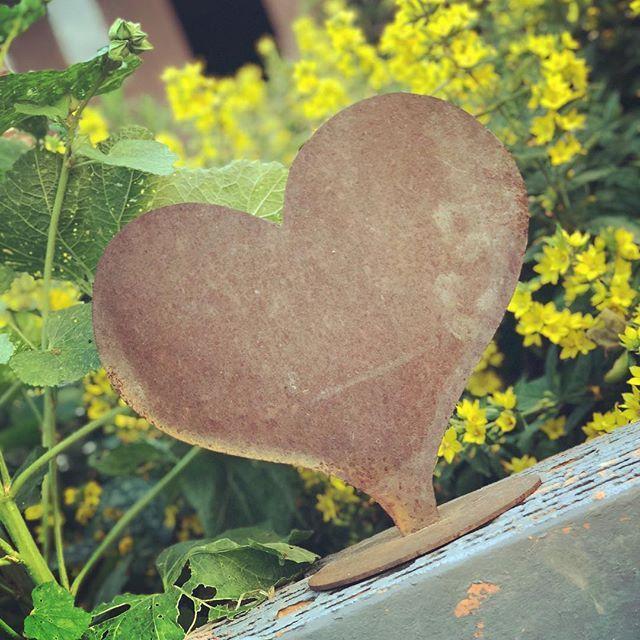 Ein #Herz aus #Gold. Welch eine Metapher. Ist das Herz nun