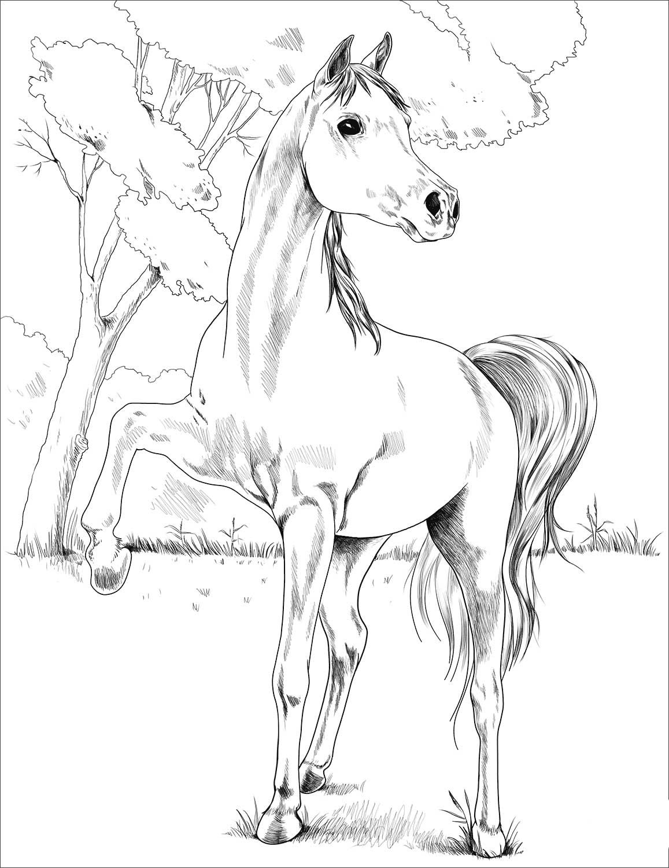 Egyptian Arabian Coloring Page Desenho De Arabe Egipcio Para Colorir Kolorowanka Egipski Kon Arabski Egyptis Horse Coloring Pages Coloring Pages Horse Coloring