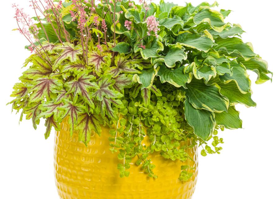 Pin By Zielonyogrodek Pl On Dekoracje Ogrodowe Herbs