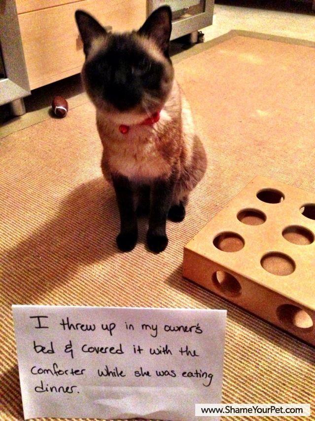 Shame Your Pet Dog Shaming Cat Shaming Shame Your Pet Cat
