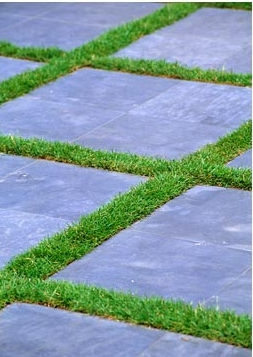 Grass Between Pavers Plant The Earth Main Sort Pinterest