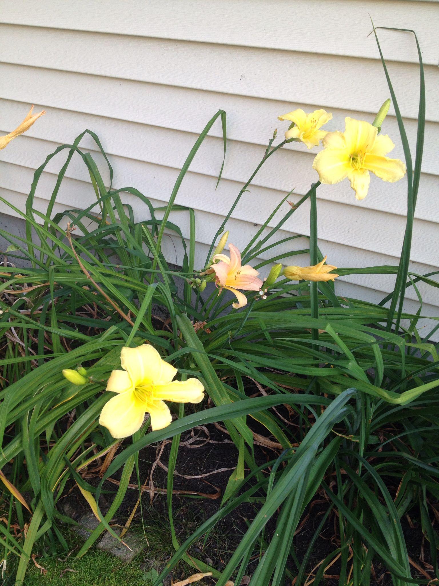 Home Flowers... | Pretty Flowers | Pinterest | Zuhause Und Blume Blumen Behaltern Zu Hause