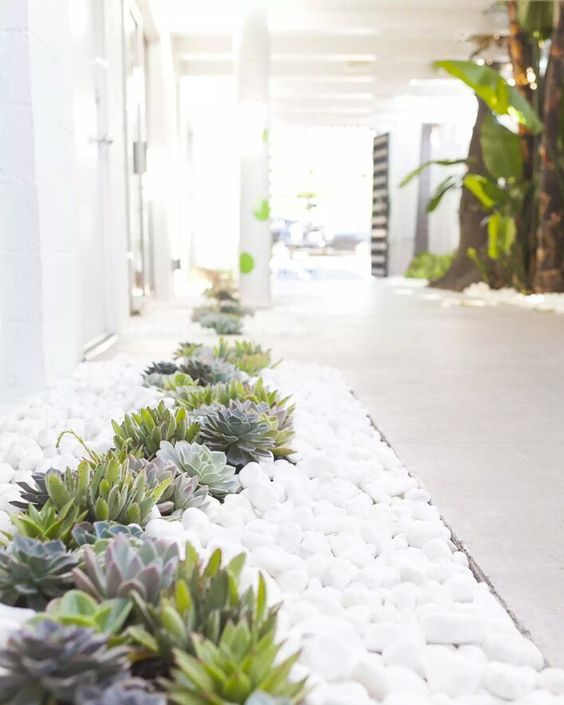 Pin de Doris Wu en entrance planting | Pinterest | Suculentas ...