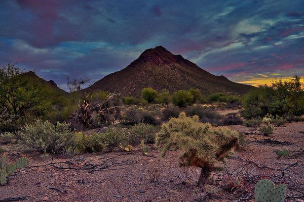 Photo of Golden Gate Mountain, a cholla, and prickly pear cactus are seen at sunset west …