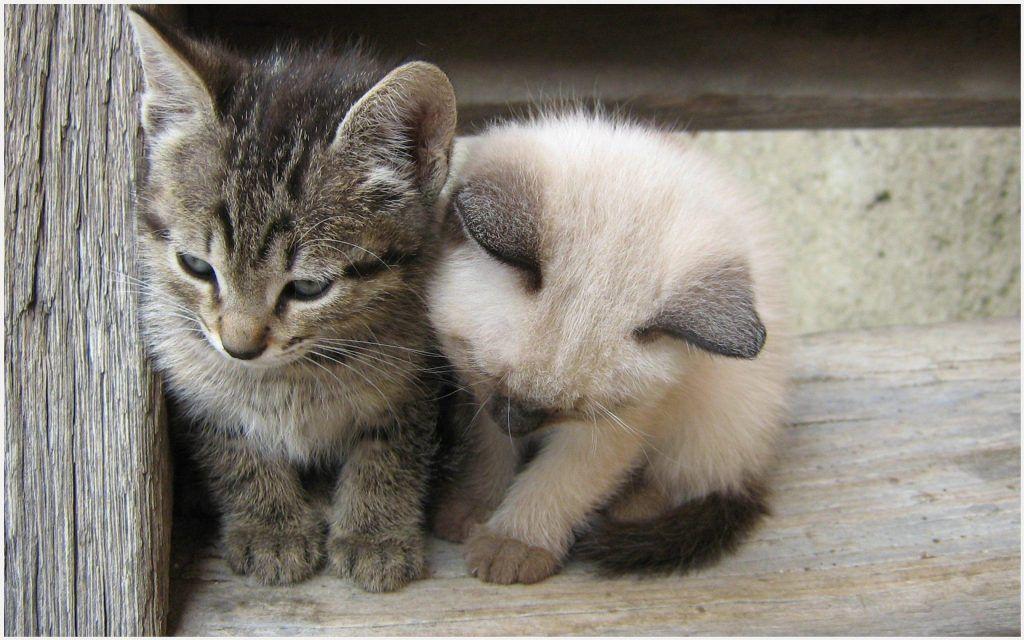 Cute Little Cats Wallpaper
