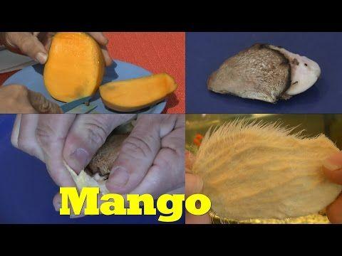 mango ganz einfach vermehren youtube pflanzen pinterest pflanzen garten und mango. Black Bedroom Furniture Sets. Home Design Ideas