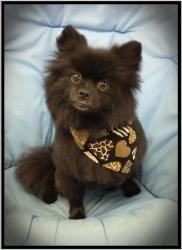 Adopt Deedee On Pets Adoption Pup