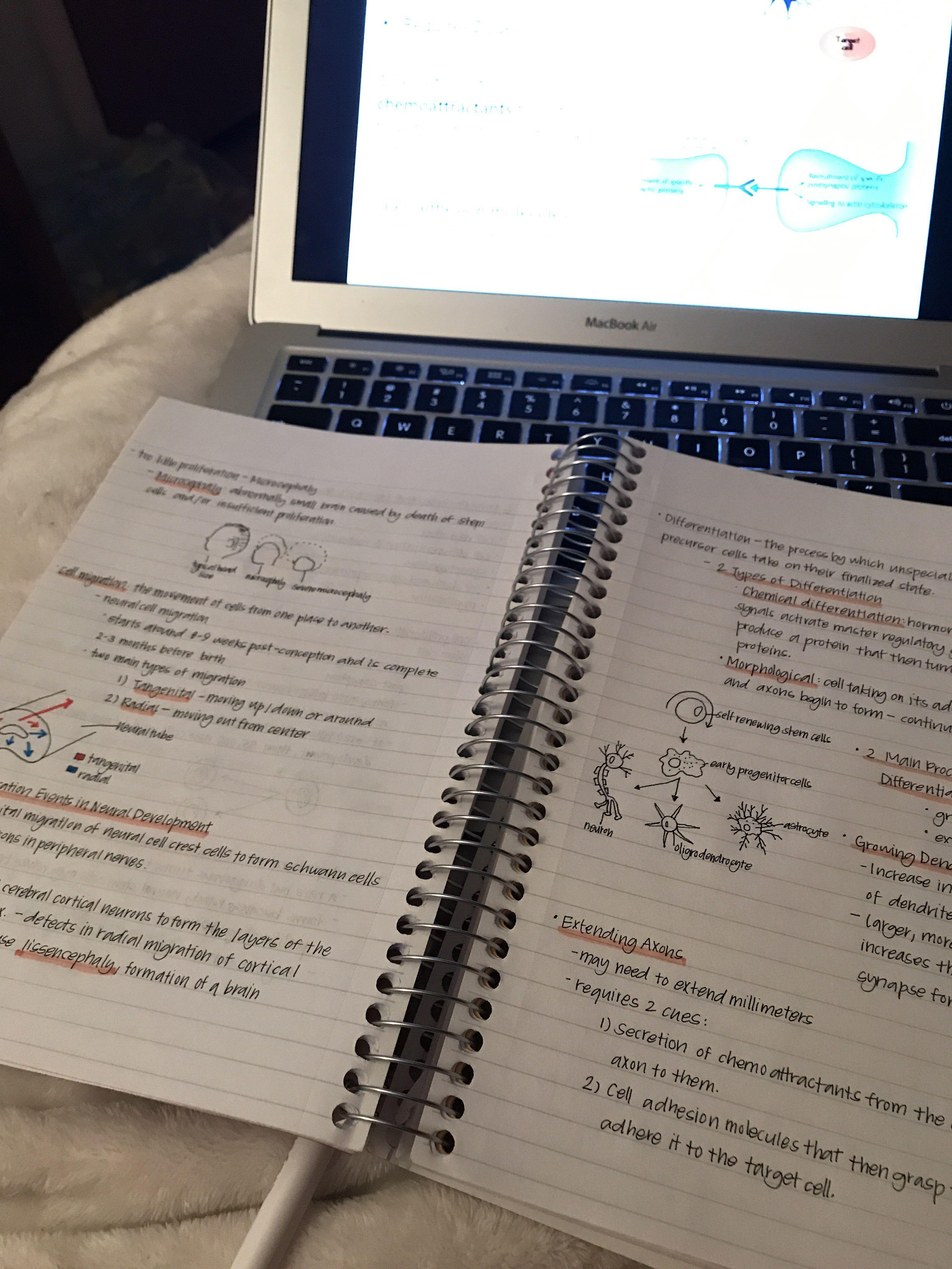 my notes from my sunday procrastination
