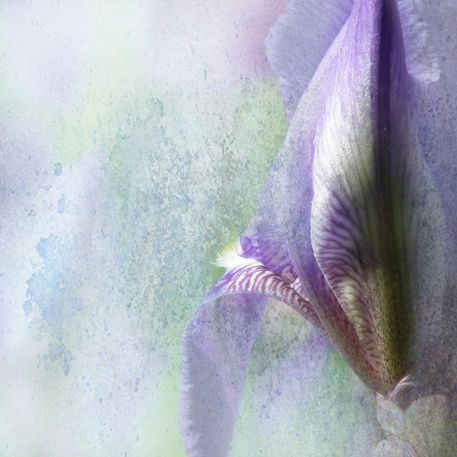 'Iris Fiorentino' by artskratches on artflakes.com as poster or art print $22.17