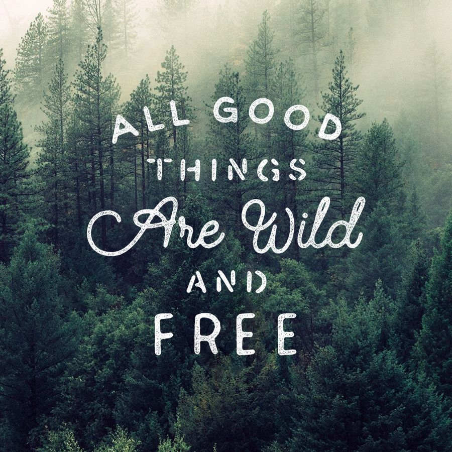 All good things are wild and free lettering by james