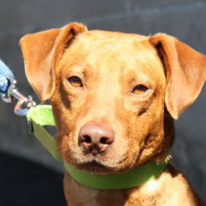 Hello. My name is Rover and I am a handsome guyfrom Georgia. I know I am going to enjoy my forever home and family life. We can go exploring at the beach, in the woods or just around the neighborhood. We can watch baseball on the TV and I promise to root for your favorite...  Read more »